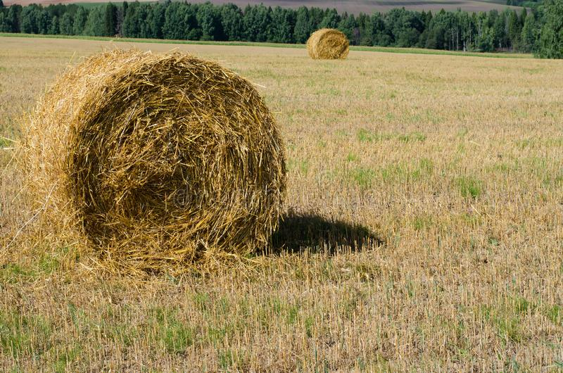Harvesting straw in the meadow. A large bale of hay close-up royalty free stock photos