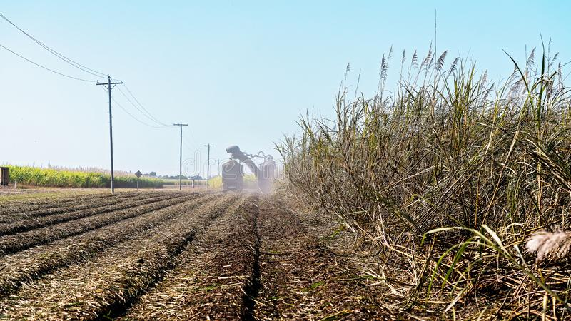 Sugar Cane Harvesting During Crushing Season In Australia. Harvesting sugar cane on an Australian farm and loading it chopped into bins for haulage to the stock photography