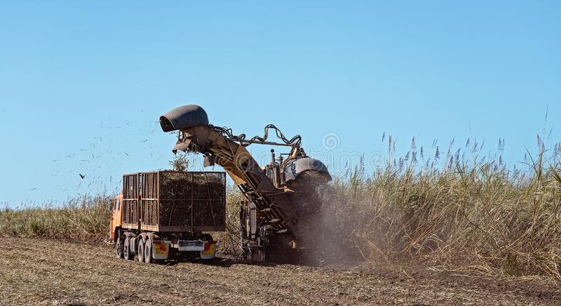 Sugar Cane Harvesting During Crushing Season In Australia. Harvesting sugar cane on an Australian farm and loading it chopped into bins for haulage to the royalty free stock images