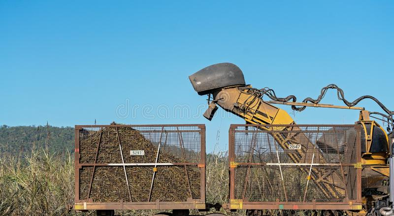 Sugar Cane Harvesting During Crushing Season In Australia. Harvesting sugar cane on an Australian farm and loading it chopped into bins for haulage to the stock photo