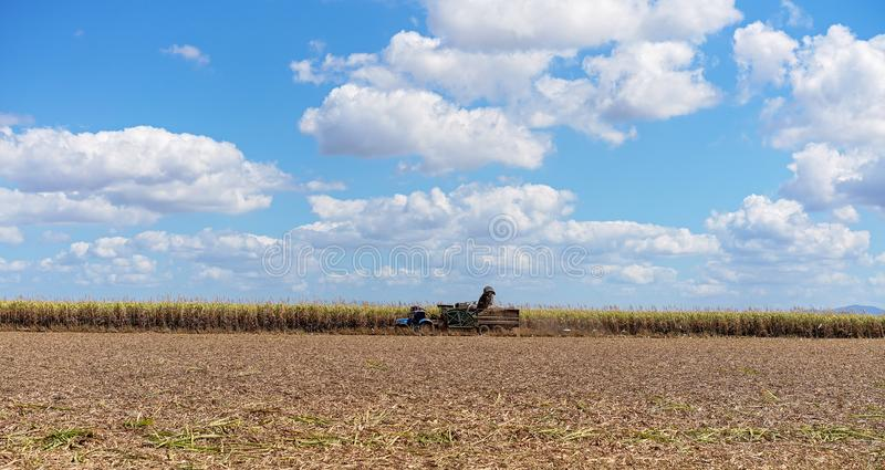 Sugar Cane Harvesting During Crushing Season In Australia. Harvesting sugar cane on an Australian farm and loading it chopped into bins for haulage to the royalty free stock photos