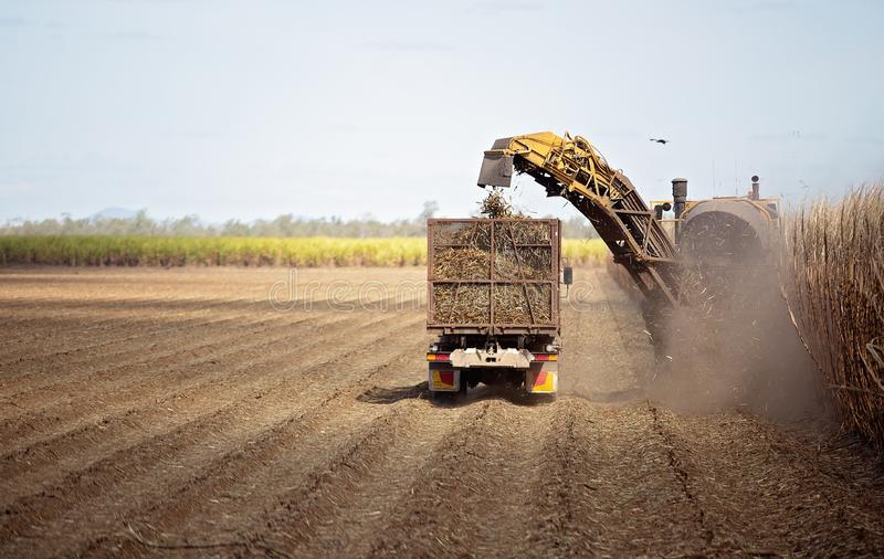 Mechanically Harvesting Sugar Cane. Harvesting sugar cane on an Australian farm and loading it chopped into bins for haulage to the refinery stock image