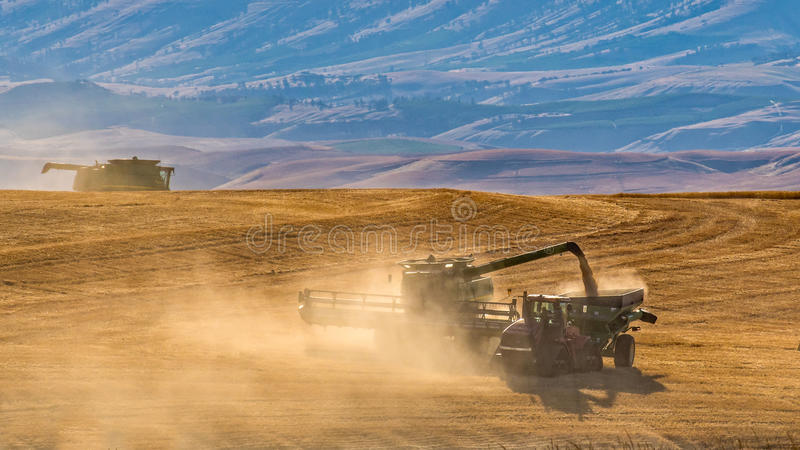 Harvesting the Wheat in a Dusty Field. A busy combine crew harvesting wheat in the hills near The Dalles, Oregon as the sun begins to set royalty free stock photo