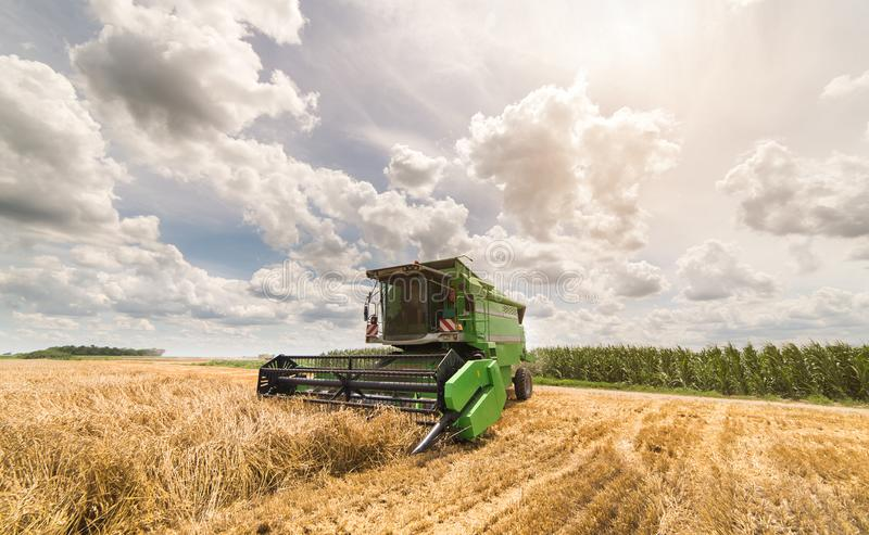 Harvesting of wheat field with combine stock photo
