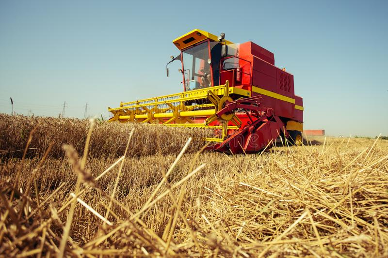 Harvesting wheat harvester on a sunny summer day. On the blue sky royalty free stock photography