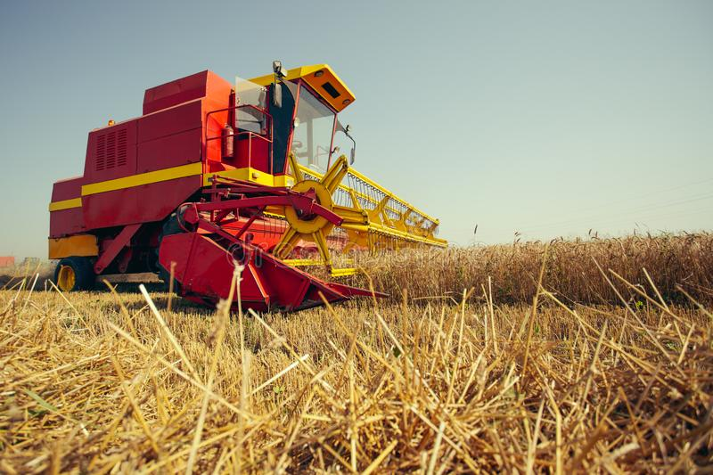 Harvesting wheat harvester on a sunny summer day. On the blue sky stock image