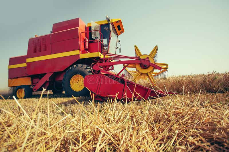 Harvesting wheat harvester on a sunny summer day. On the blue sky stock photo