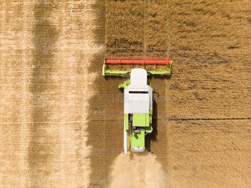Harvesting of wheat in summer. Combine harvester agricultural machine collecting golden ripe wheat on the field. View. From above stock image