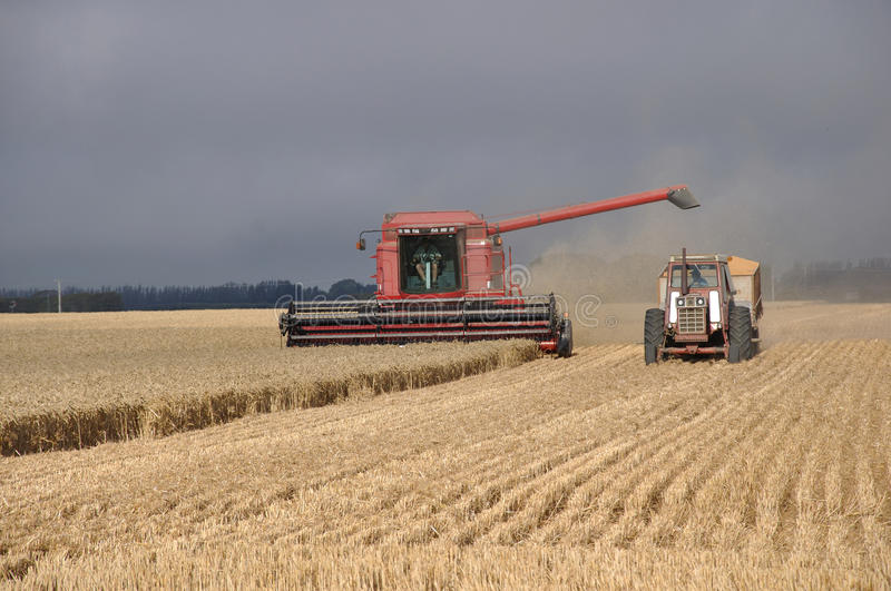 Harvesting the wheat royalty free stock images
