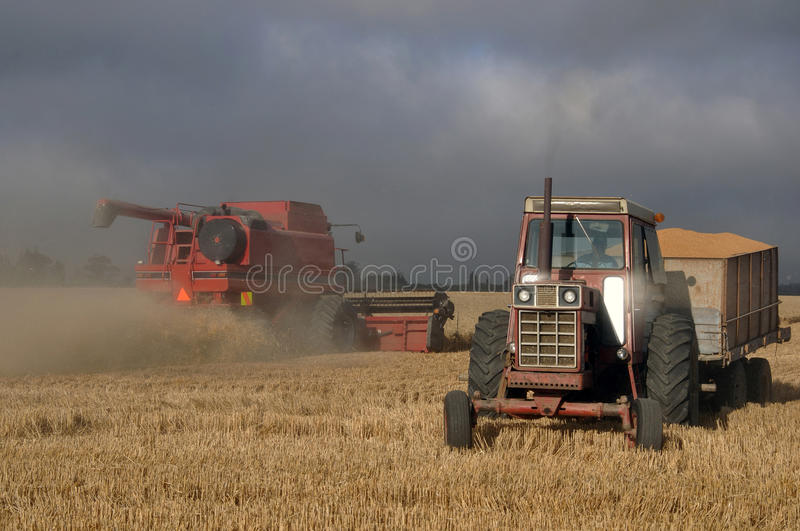 Harvesting the wheat stock photography