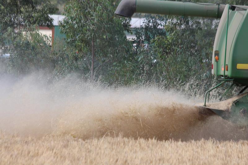 Harvesting Wheat. Is very dusty and it is generally in the very hot weather, which makes harvesting an unpleasant job unless you have air-conditioning in the royalty free stock image