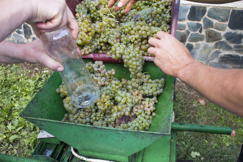 Harvesting and wine making stock images