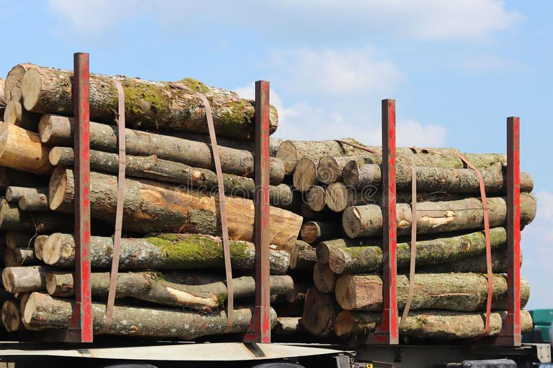 Harvesting of wood on a car. The sawn logs lie in the woodpile. Heating of premises in the village. Industrial deforestation of fo. Rests and green spaces. Cross royalty free stock image