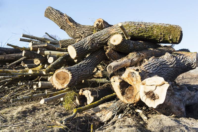Harvesting of wood, trunks of felled trees royalty free stock images