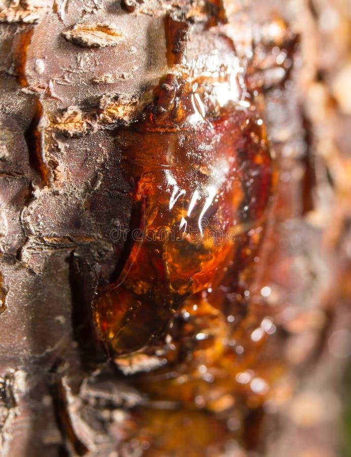 Harz auf dem Baum abschluß lizenzfreie stockfotografie