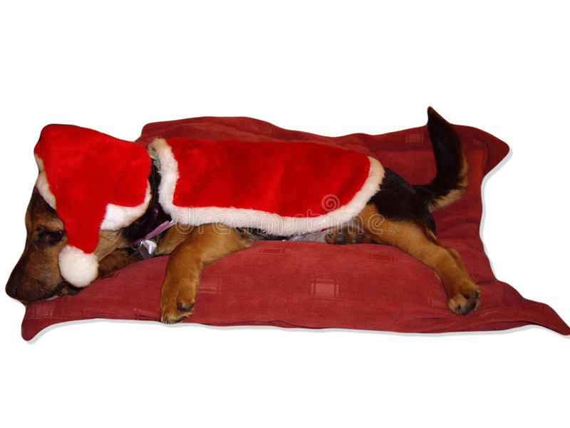 Download Has Santa been yet stock photo. Image of puppy, cushion - 3737382