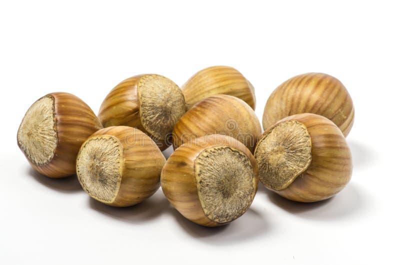 Download Haselnüße stockbild. Bild von weiß, essen, hart, shell - 27727189