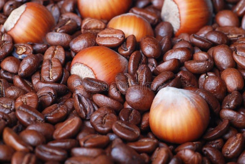 Download Haselnuss stockfoto. Bild von kaffee, getränk, nahrung - 9084240