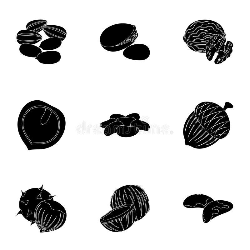 Haselnuss, Pistazien, Erdnüsse und andere Arten Nüsse Verschiedene Arten von gesetzten Sammlungsikonen der Nüsse im schwarzen Art lizenzfreie abbildung