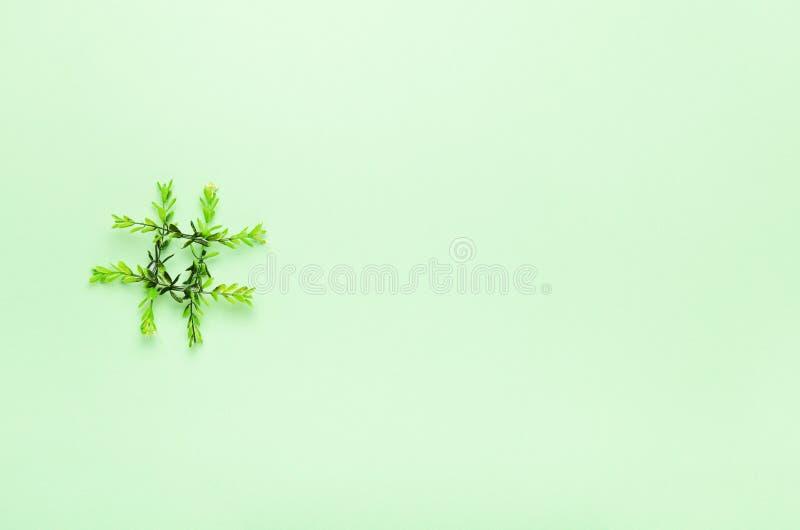 Hashtag de las ramitas verdes en un fondo verde Verdes del concepto, primavera, ecología, tecnología en línea Copie el espacio, v foto de archivo libre de regalías