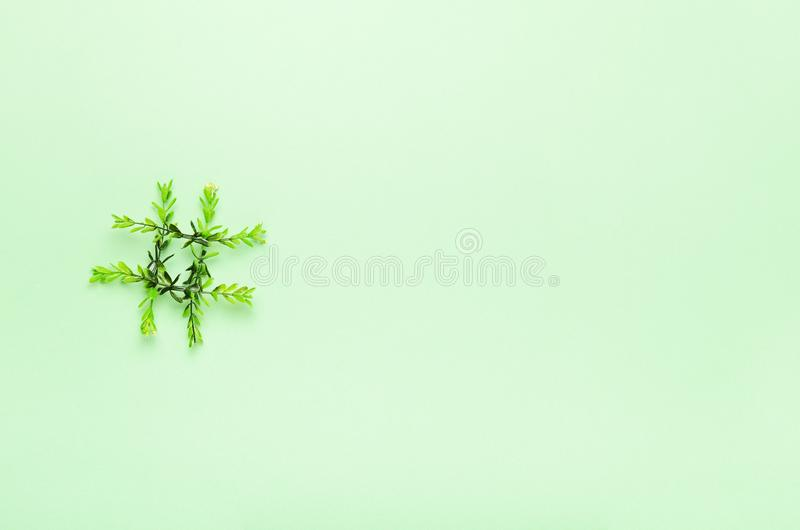 Hashtag dos galhos verdes em um fundo verde Verdes do conceito, mola, ecologia, tecnologia em linha Copie o espa?o, vista superio foto de stock royalty free