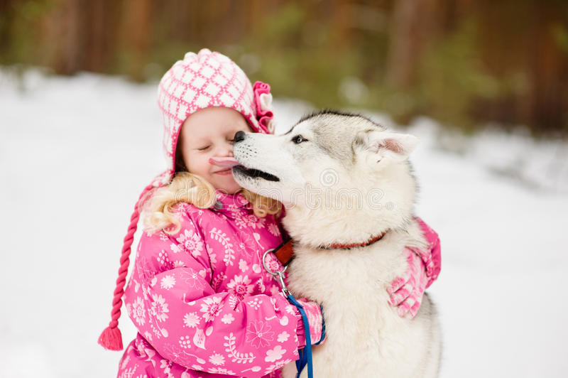 Hasky dog licking little girl. Focus on dog stock images