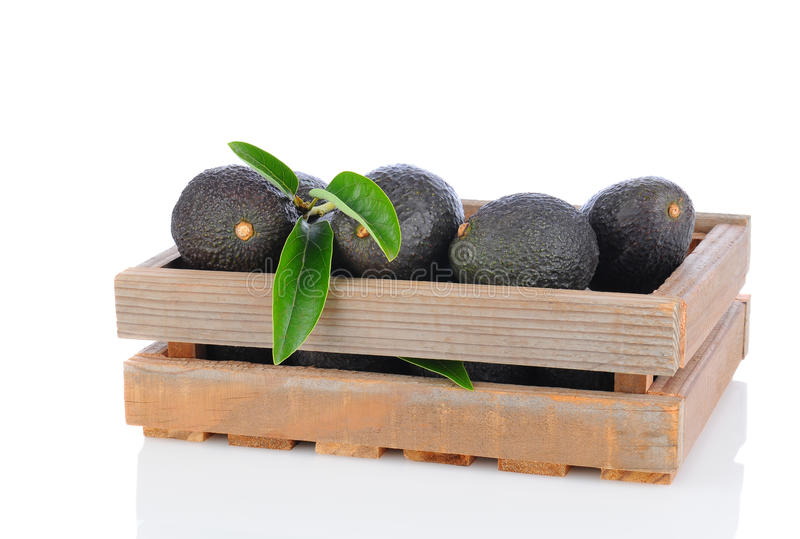 Hass Avocados im hölzernen Rahmen lizenzfreie stockfotografie