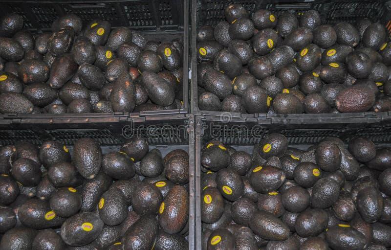 Hass chilenos pretos do abacate foto de stock