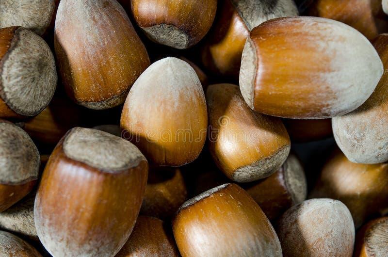 Hasselnötter Matbakgrund, fototapet Muttermakro royaltyfri foto