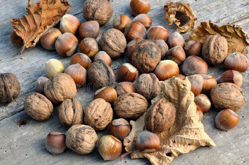 Hasselnötter och valnötter royaltyfri bild