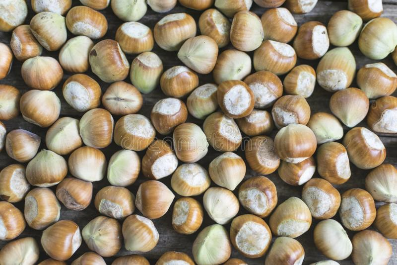 Hasselnötter som väljs nytt Fullt ramfoto arkivfoton