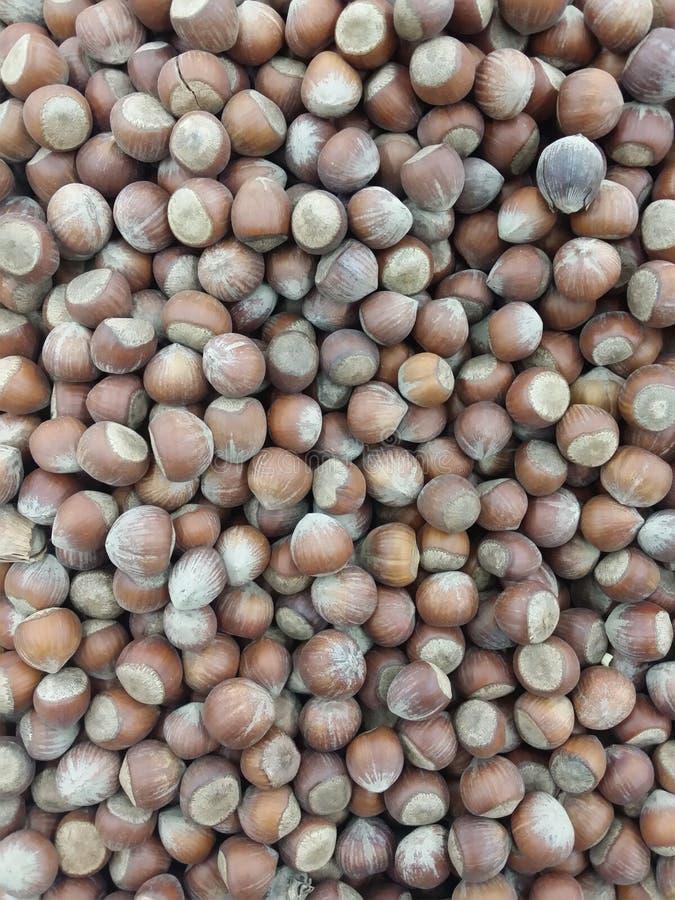 Hasselnötter torkar fruktmutterbild arkivfoto