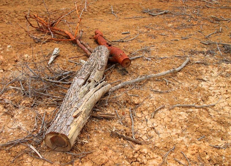 Haste da árvore após o desflorestamento foto de stock royalty free