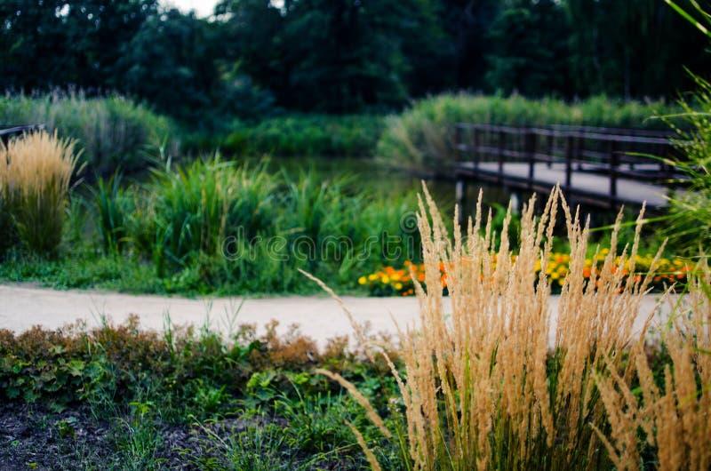 Haste da grama verde que cresce fora fotos de stock
