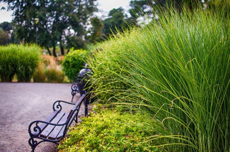 Haste da grama verde que cresce fora imagens de stock