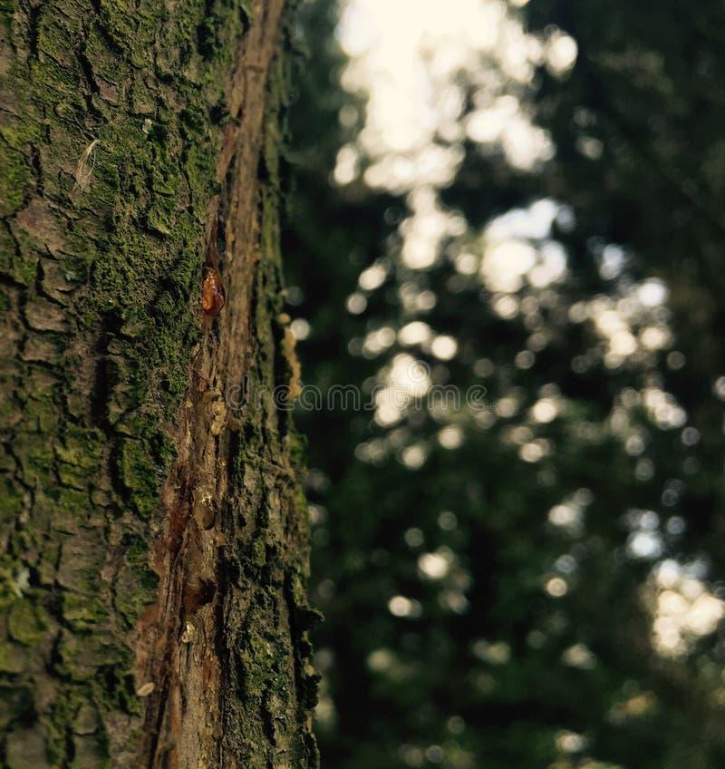 Download Haste de grito foto de stock. Imagem de árvore, madeiras - 107527604