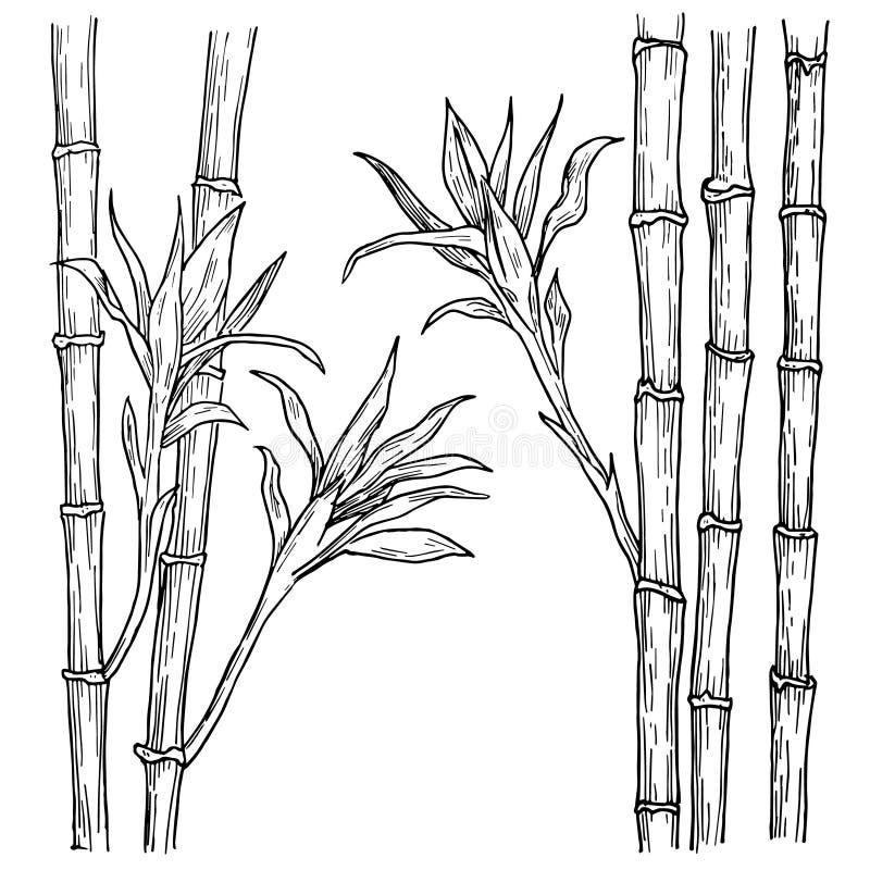 A haste e as folhas de bambu entregam tirado O vetor gravou a ilustração do estilo, isolada no branco ilustração royalty free