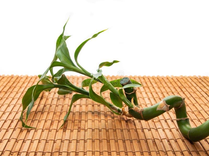 Haste e folhas das mentiras de bambu em um guardanapo de bambu em um fundo branco imagem de stock