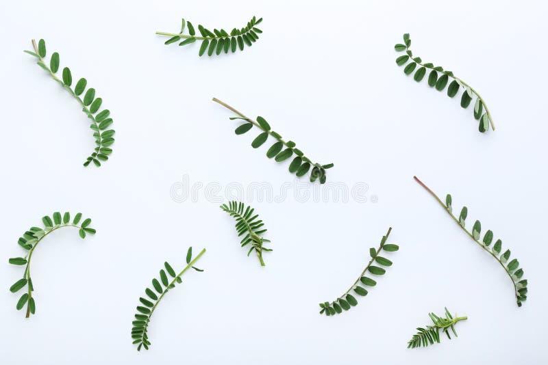Hastes com folhas verdes imagens de stock royalty free