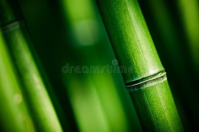 Hastes de bambu verdes