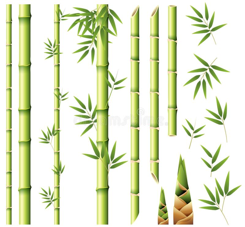 Hastes e folhas de bambu ilustração stock