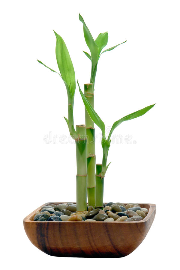 Hastes e folhas de bambu em um prato de madeira fotos de stock royalty free