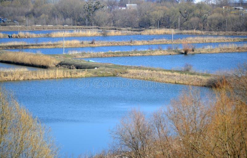 Hastigheter för fisklantgård royaltyfria bilder