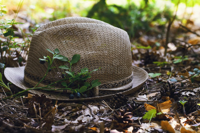 Hat and blueberries in a summer forest stock image