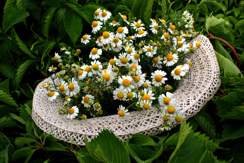 Hat and daisies, stock image
