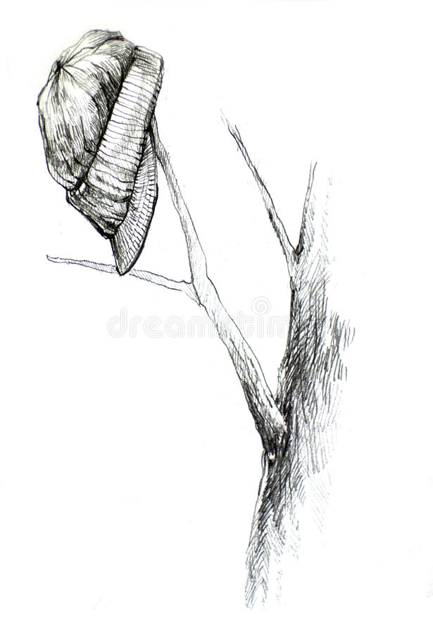 Hat drawing on tree branch royalty free stock images