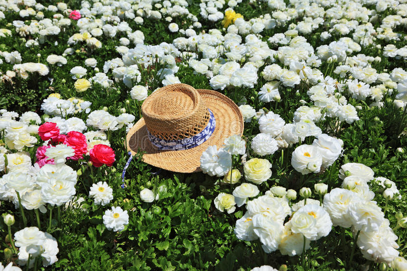 Download The hat and  flowers stock photo. Image of field, bright - 14256560