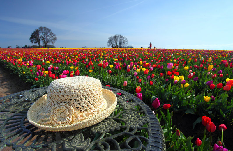 Download Hat And Flowers Royalty Free Stock Photography - Image: 9121807