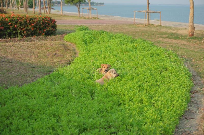 Hat Hunde einen guten Moment an der KEINER Verdammung 2 lizenzfreies stockbild