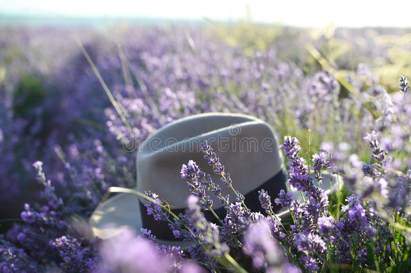 Hat in a lavender field, selective focus. Sunrise in a lavender field. Concept of travel, leisure, beauty. Summer. Provence, royalty free stock image
